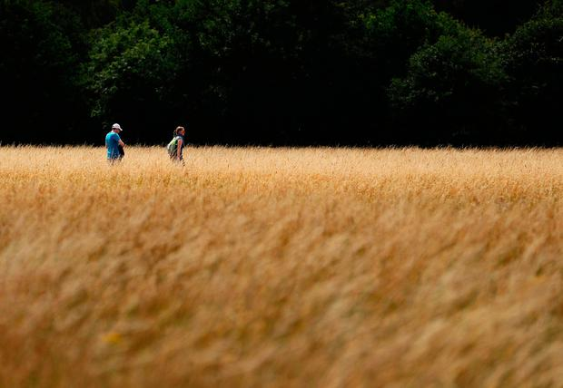 People walk in Dublin's Phoenix park during the good weather. The east and south experienced the most prolonged period of drought and high temperatures in the country last month. Photo: PA