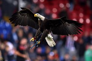 A rival football fan has been found guilty of trying to punch Crystal Palace's American bald eagle mascot at a cup tie marred by crowd trouble. Photo credit: Steve Paston/PA Wire