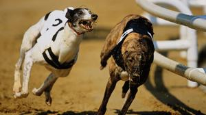 Oran Don and Ballymac Cooper are set for an intriguing head-to-head in the final of the Champion 550 at Shelbourne Park next weekend, after both captured their semi-finals in fine fashion on Saturday night. (stock photo)