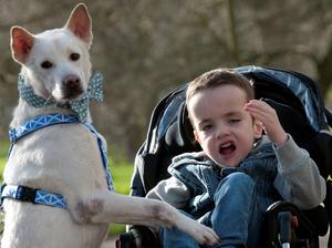 Kyle Leask, 6, from Inverness in Scotland who has cerebral palsy and autism with his rescued Crossbreed Miracle, during their Crufts 2015 Photo: Hannah McKay/PA Wire