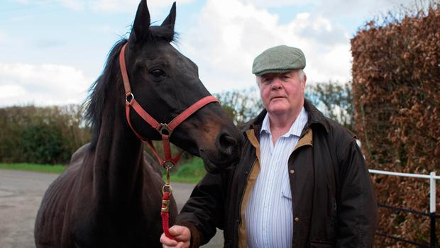 Paddy Behan with his mare Monte Solaro, who is one month overdue with foal. Monte Solaro is the dam of Altior -  the odds-on favourite for today's Arkle Trophy at Cheltenham. Photo: Alf Harvey