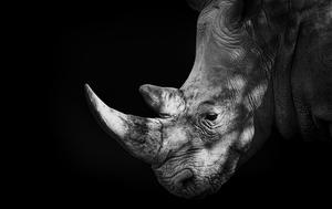 Fota WIldlife Park is set to introduce Indian rhino in July, with Asian lions due to follow in 2016.