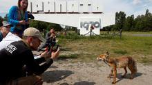 Visitors take pictures of a fox in the abandoned city of Pripyat, near the Chernobyl nuclear power plant, Ukraine June 2, 2019. Picture taken June 2, 2019.  REUTERS/Valentyn Ogirenko     TPX IMAGES OF THE DAY