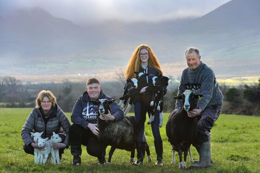 Cian O'Sullivan, a first year Agricultural Science Student at CIT, was home for Christmas to deliver quad Zwartables lambs and twin texel lambs, just one day old, on the family farm at Cooleanig, Beaufort, Co Kerry. On hand to helpwere his younger Sister Orla and parents Derry and Eileen O'Sullivan. Cian's Zwartable Ewe is the proud mother of 26 lambs to date. Photo: Valerie O'Sullivan