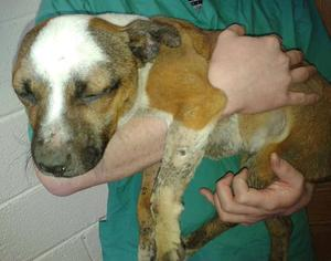 Puppy, who was named Tony by volunteers, was found to have been roasted alive over a fire