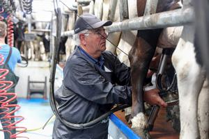 Michael Booth milking in the new parlour