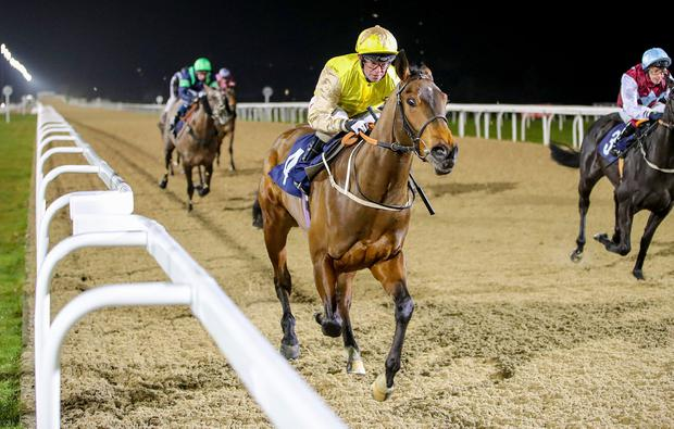 IN FORM: Mountain Brave can keep Mark Johnson's run going at Haydock. Photo: Grossick Racing Photography