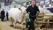 Day three of last year's Balmoral Show.
