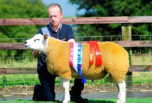 Rodney McLoughlin, Clonmany, Co Donegal, with the male champion at the Irish Texel Society show last weekend in Blessington. By All- Ireland champion, Strathbogie Uno, out of a home bred ewe, the prize-winner sold for 6,500gns.