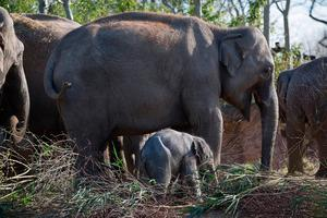 The newborn is a significant success for Dublin Zoo as part of the international breeding programme established to assist the survival of the Asian elephant Picture: Patrick Bolger