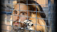 "Fabio Borini's agent thinks his client is like a ""lion in a cage"". So..."