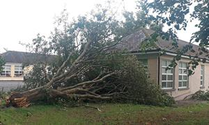 A fallen tree at Midleton Community Hospital in Cork as Storm Ellen hit Ireland  Photo credit: Shay Bollard/Twitter/PA Wire
