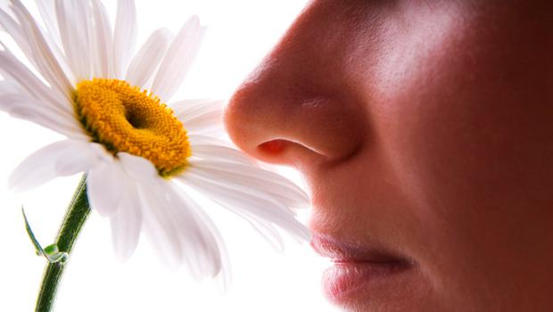 There are strong correlations between nose traits and climate (Stock picture)