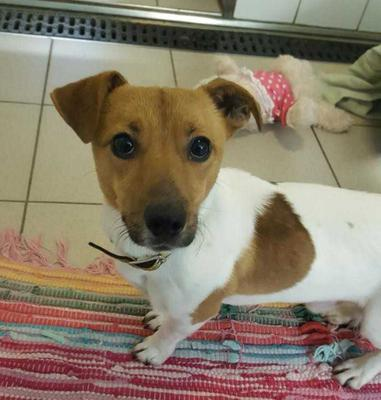 Little PJ is looking for a forever home. Pic: Dogs Trust