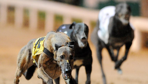 Doolin Duke has the better of the draw but one suspects Newinn Session is destined for greatness and he gets the nod to dominate from the outset (stock photo)
