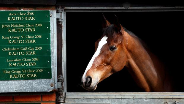Kauto Star in his stable during the stable visit at Manor Farm, Ditcheat