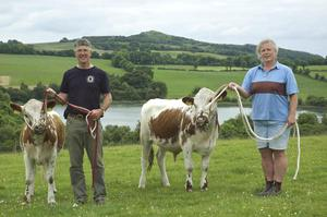 Rare breed: Christopher and Helen Kelly of Lough Bishop House B&B with their Irish Moiled cattle