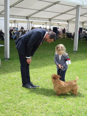 Jessica Allen, four, was the youngest handler at Crufts. Photo: Penny Wallington