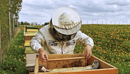 The farm now has its first hive of honeybees. Photo: Getty Images.