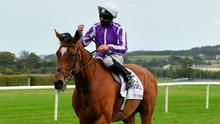 Magical has won seven Group Ones. Photo: Sportsfile