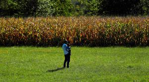 A migrant holding a child walks through a field towards the Hungarian border after arriving at the train station in Botovo, Croatia REUTERS/Antonio Bronic