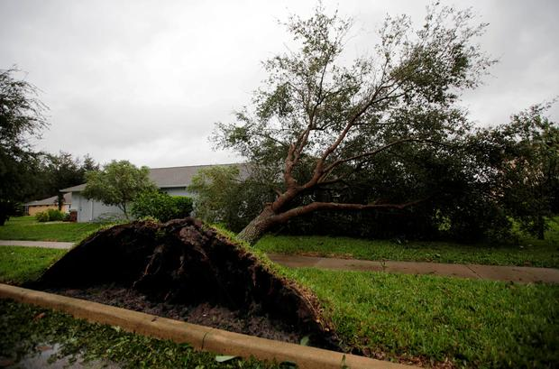 A fallen tree is seen outside a house in the aftermath of Hurricane Matthew in Daytona Beach, Florida. Photo: Reuters
