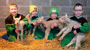Four-most: Charlie, Tom, Luke and James Kelly with their new quad lambs, Chloe, Betty, Frosty and Bubbles, at the family farm in Kilclonfert, Daingean, Co Offaly. Photo: Ger Rogers