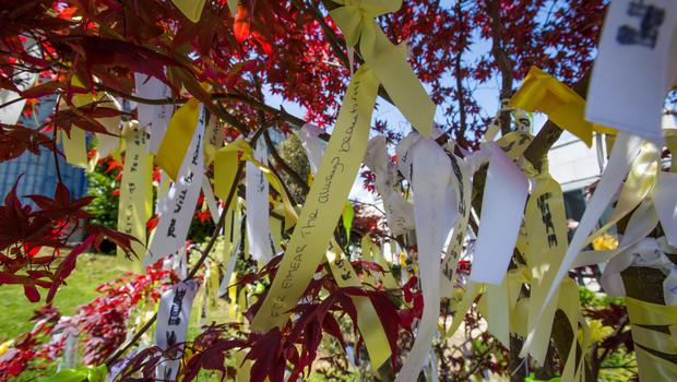 Ribbons left on a tree at the Our Lady of Perpetual Succour church in Foxrock. Picture: Mark Condren