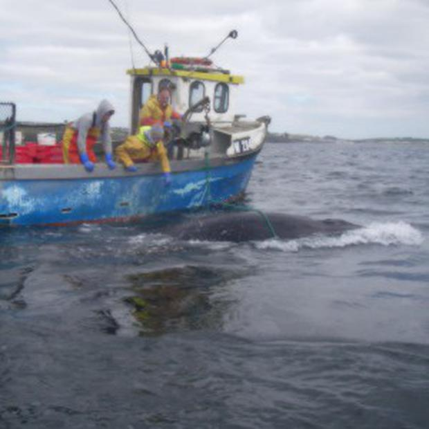 A whale is rescued after becoming snared in lobster pots in Tramore Bay off the coast of Co Waterford (PA/RNLI)