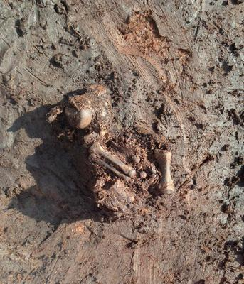 The bog body dug up in Rossan bog in Meath, close to the border with Westmeath
