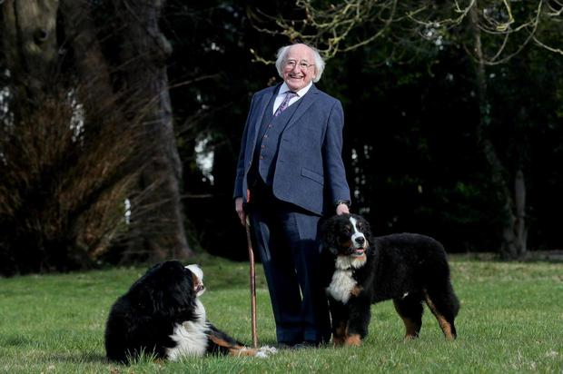 President Michael D Higgins and his dogs Bród and Misneach