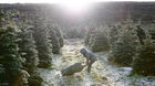 Oisín Carson (5) picks a Christmas tree at Wicklow Way farm in Roundwood