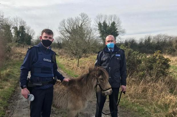 Gardaí rescue a starving and injured pony which had been cruelly abandoned in a Tipperary bog