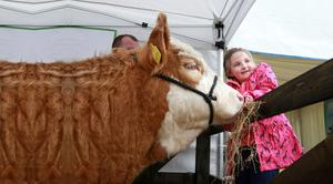 Julie O Donovan (7) from Skibbereen, offers a little hay to cow 'Lisnacrann Fiddle Fart' at the National Ploughing Championships in Ratheniska, Co Laois, yesterday