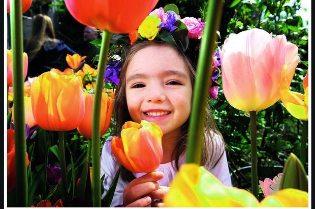 Four Year old Millie Kelly from Raheny pictured with some of the colourful flowers art the Dillon garden in Renelagh