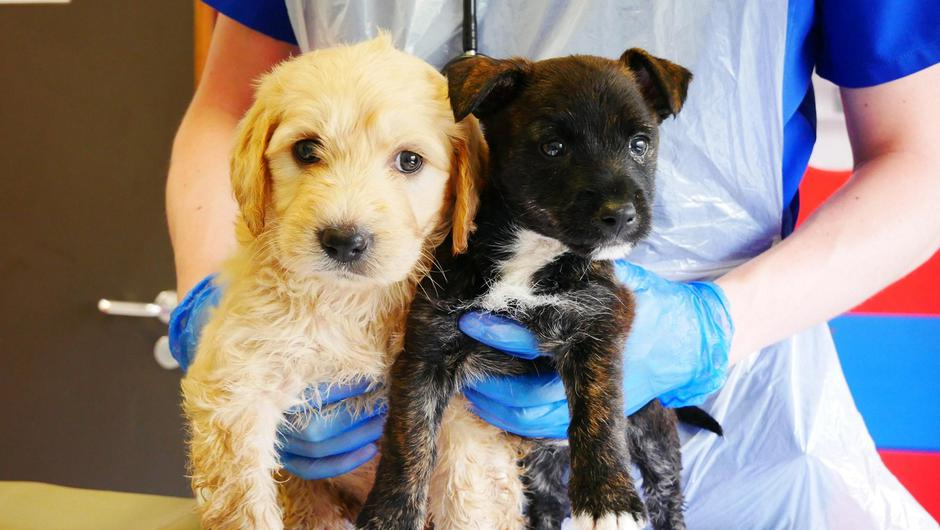 Puppies 'Summer' and 'Solero' rescued by Revenue Officials