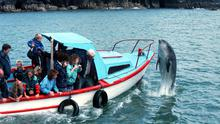 Fungie the dolphin interacts with visitors on boats off Dingle