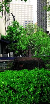 Tree damage at the Merchants River House restaurant in New York
