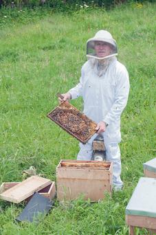 Beekeeper Michael Moynihan at work in Dungarvan, Co Waterford.