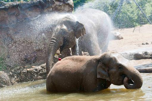 Mother and child Yasmin and Anuk, cool off at Dublin Zoo as Ireland's heatwave continues