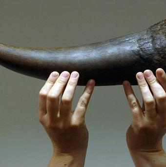 Michael Slattery used forged documents to sell horns from endangered black rhinos to a US collector, a court heard