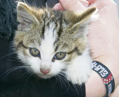 The kitten, named Maude, who stowed away in a hire car from Dublin to Cork
