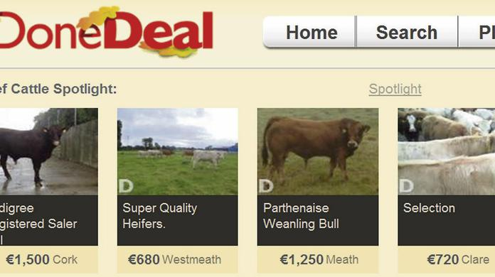 Younger farmers ditch cattle marts for online sales