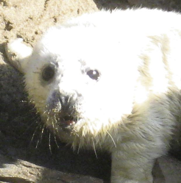 Brothers Rory (7) and Marwin O'Sullivan (15) found this seal pup on a beach near Dingle