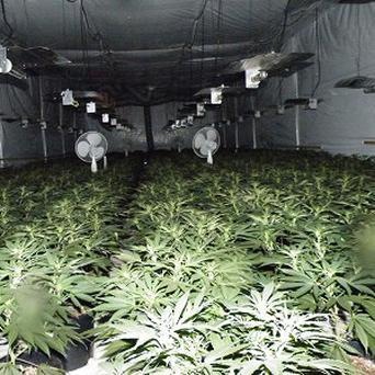 A number of follow-up searches took place and two kilos of cannabis herb worth 40,000 euro were seized
