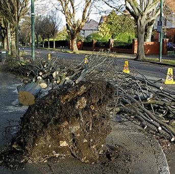 Fallen trees, strong winds and wintry showers are making driving conditions difficult, drivers have been warned.