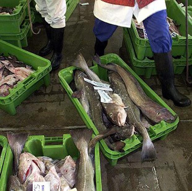 Cod being sold at market.
