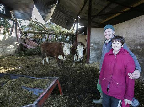 Liam and Annette Donegan with their cows who where lucky to escape a falling tree. Mark Condren