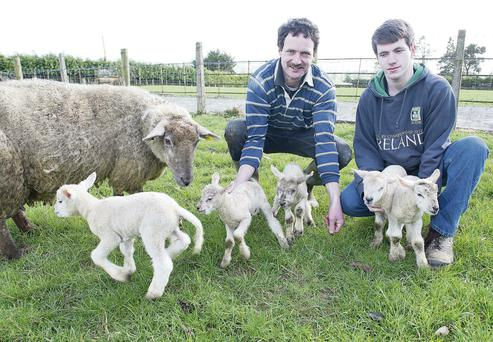 Farmer Brendan Griffin and his son Jason with the sheep and her five newborn lambs. Andrew Downes