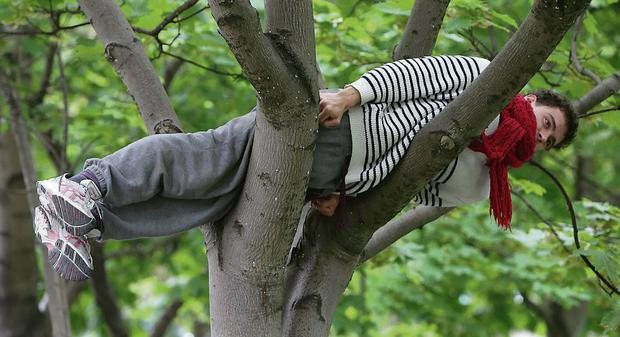 A man balances in a tree as part of Bodies in Urban Spaces in Dublin city centre